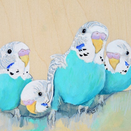 A nest full (Baby Budgies)