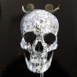 Skull with two snails john graham bluethumb art