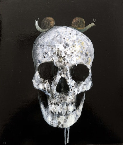 Skull with two snails