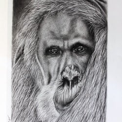 Kluet from adelaide zoo in charcoals linda hammond bluethumb art.jpg?ixlib=rails 2.1