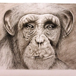 Chimp 280715 a3 charcoals unframed linda hammond bluethumb art.jpg?ixlib=rails 2.1
