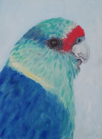 Mallee Parrot