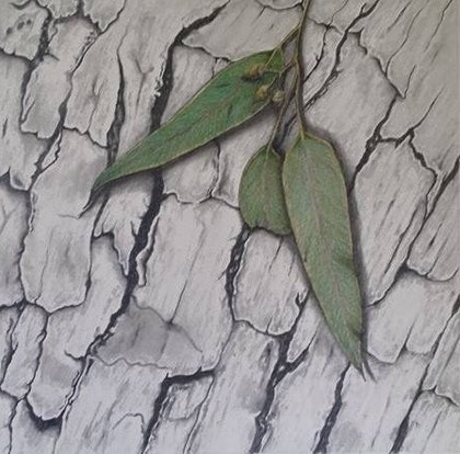 Gum leaves and bark (unframed)
