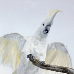 Good morning from the cockatoo naomi veitch bluethumb art f989