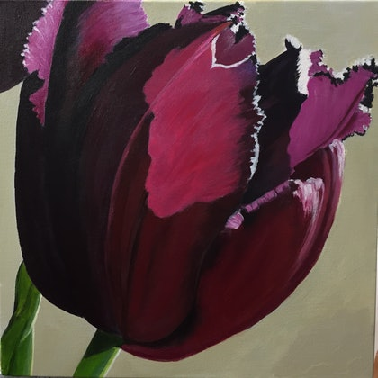 Still Life Botanicals Series - Queen of the Night Tulip