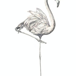 Phoenicopterus roseus limited edition giclee print jessica le clerc bluethumb art.jpg?w=250&h=250&fit=crop&mark=https%3a%2f%2fimages.bluethumb.com.au%2fbluethumb art assets%2fwatermark%2fbt watermark