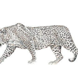 Panthera pardus limited edition giclee print jessica le clerc bluethumb art.jpg?w=250&h=250&fit=crop&mark=https%3a%2f%2fimages.bluethumb.com.au%2fbluethumb art assets%2fwatermark%2fbt watermark