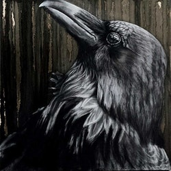 Nevermore 3 50 karen bloomfield bluethumb art