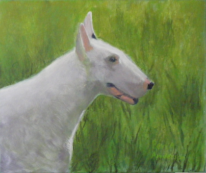 Petey The Bull Terrier