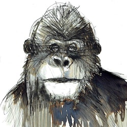 Gorilla john graham bluethumb art