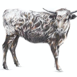 Bos taurus limited edition giclee print jessica le clerc bluethumb art.jpg?w=250&h=250&fit=crop&mark=https%3a%2f%2fimages.bluethumb.com.au%2fbluethumb art assets%2fwatermark%2fbt watermark