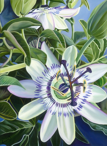 Passion Flower Dreaming