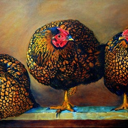Chickens in the coop lydie paton bluethumb art