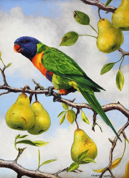 Rainbow Lorikeet in the Pear Tree