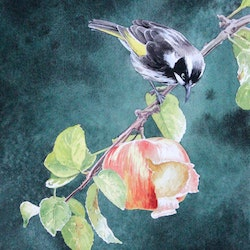 New holland honeyeater with apple graeme whittle bluethumb art