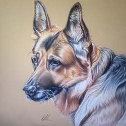 German shepherd kay davidson bluethumb art
