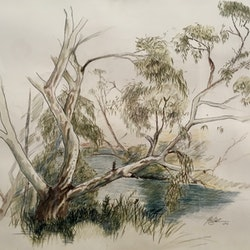River gum on the maribyrnong john barcham bluethumb art.jpg?ixlib=rails 2.1