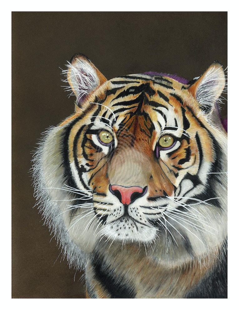 Tiger limited edition art prints 3/200, signed and numbered by the artist