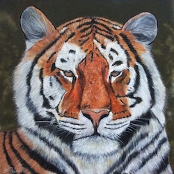 Tiger gabriele phillis bluethumb art