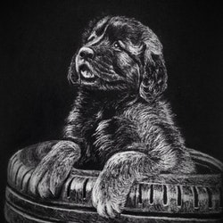Leonberger puppy kay davidson bluethumb art