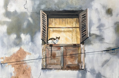 Cat in a window, Stone Town,  Zanzibar