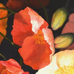 Poppy pandemonium a panorama of poppies jan matson bluethumb art