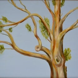 Red gum sally wilkins bluethumb art
