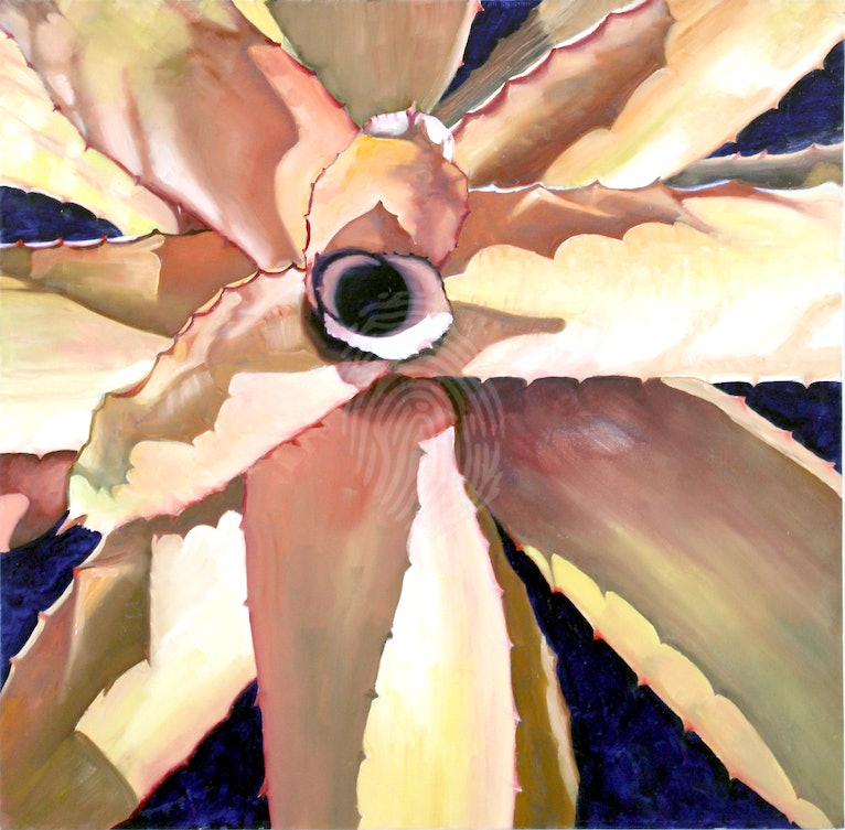 Bromeliad - A study in light