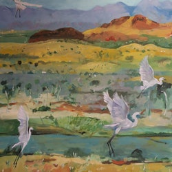 Taking off egrets susan trudinger bluethumb art