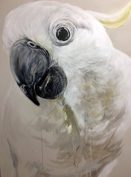 BOO! the Cockatoo
