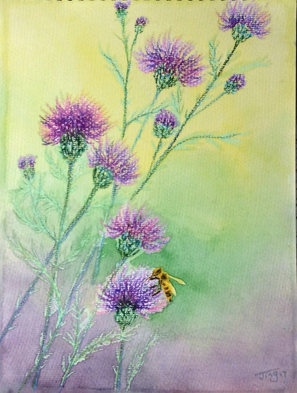 Bee&wild purple thistle
