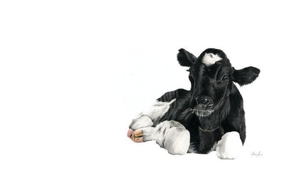 Baby Calf Limited Edition Print Ed. 69 of 100