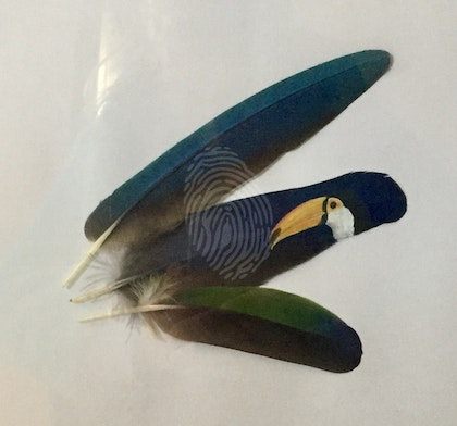 Toucan On a feather framed