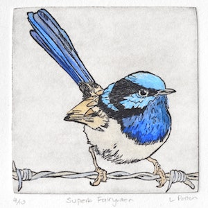 Superb fairywren lydie paton bluethumb art d647