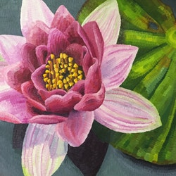 Nelumbo lotus in the gardens elisabeth howlett bluethumb art f654