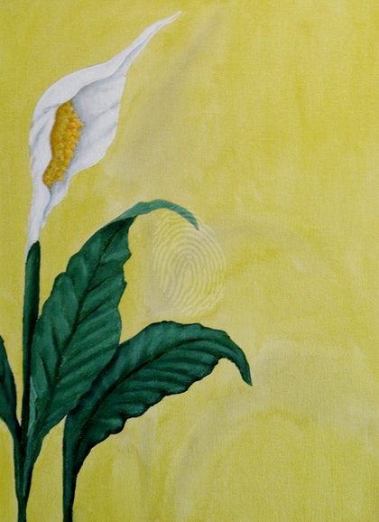 Peace Lilly on Yellow