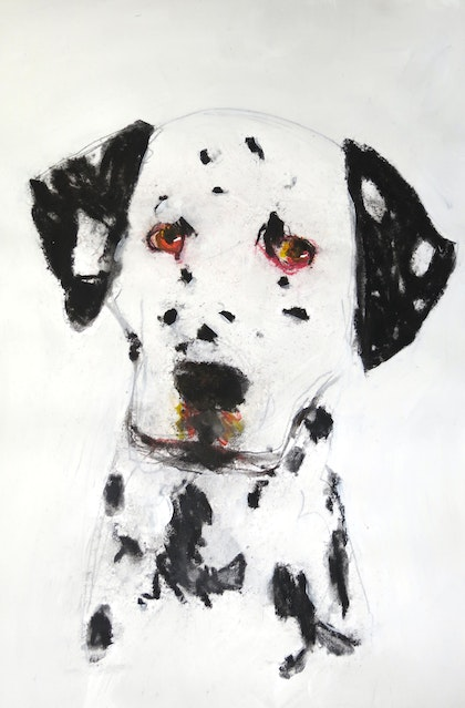 Doggie portrait Number 4 - Dalmation
