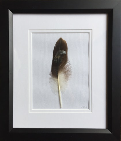 Wedge Tailed Eagle on Feather Framed