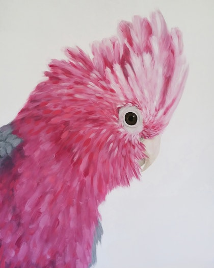"""""""What Cha Doin"""" Galah Limited Edition Print Ed. 5 of 100"""
