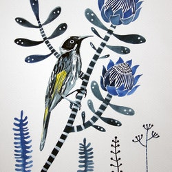 New holland honeyeater and indigo proteas sally browne bluethumb art 6be8
