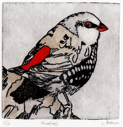 Diamond Firetail #2