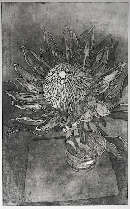 King Protea (Etching) Ed. 1 of 50
