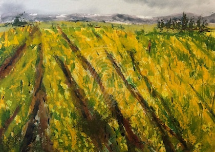 The Fields are Alive with the Mass of Golden Daffodils Gently Swaying in the Breeze