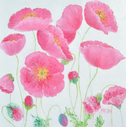 Pink Poppies on a white background