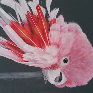What major mitchell cockatoo naomi veitch bluethumb art a86e