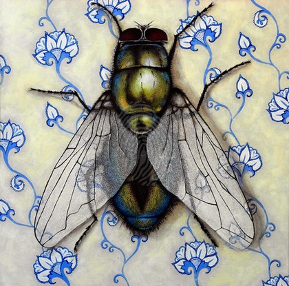 Fly On The Wall 1 (House Fly)