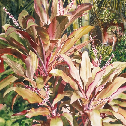"THE CLASSIC SERIES  ""CORDYLINE ALFRESCO NOOSA""  ORIGINAL"