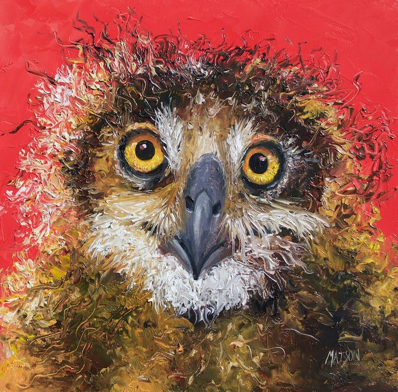 Owl on red background