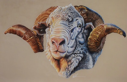 Hay runner ram limited addition prints  Ed. 2 of 1000