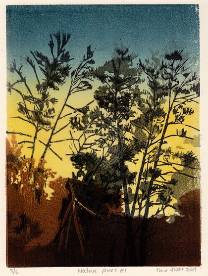 Native Pines #1 Ed. 5 of 6